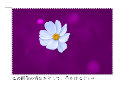 きれいに花以外を紫色にできた