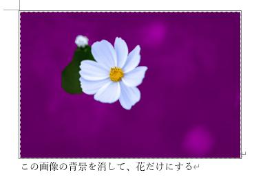 背景が紫色に塗られた