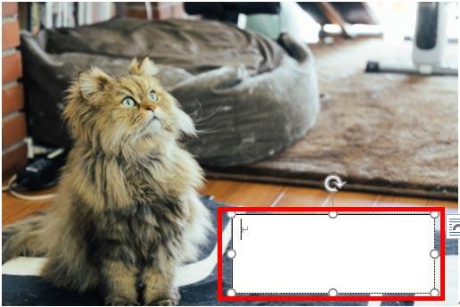 テキストボックスが挿入された画像
