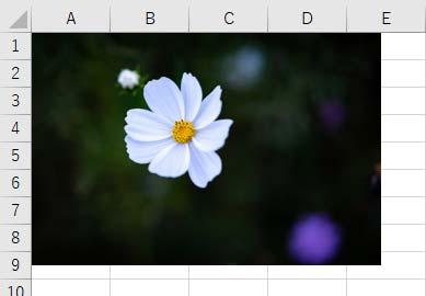 白い花に黒い背景の画像